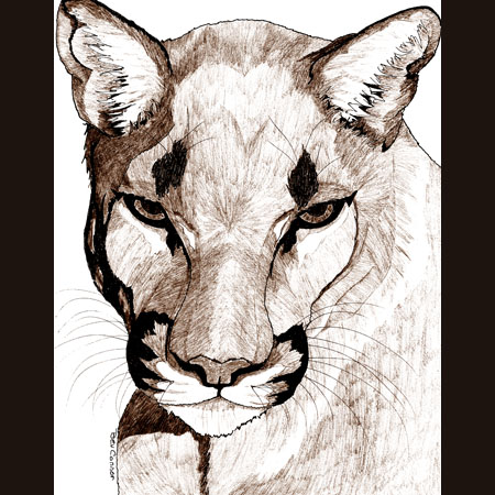drawing of Cougar