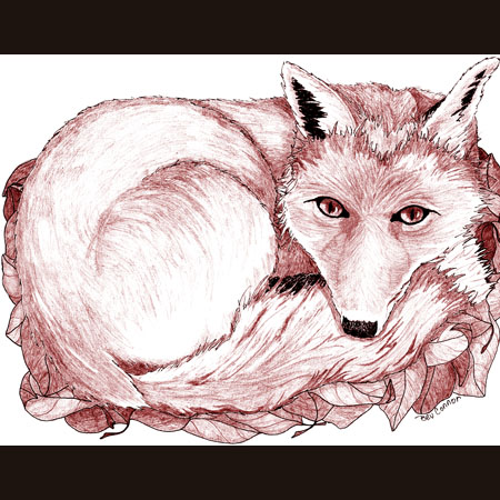 drawing of Red Fox