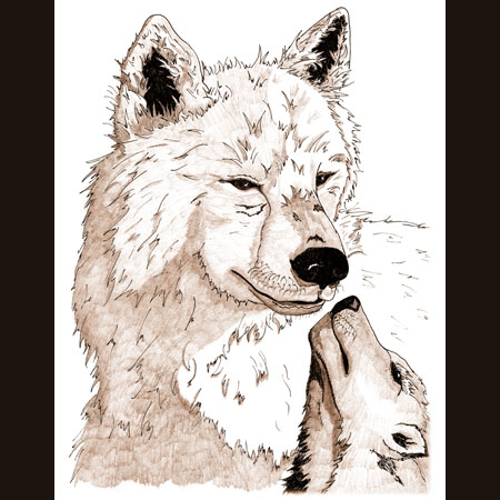 drawing of Arctic Wolf