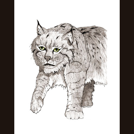 drawing of Bobcat