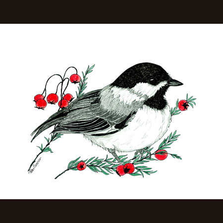 drawing of Chickadee