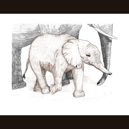 drawing of Elephant Baby