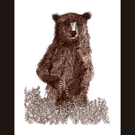 drawing of Grizzly Male