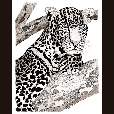 drawing of Leopard