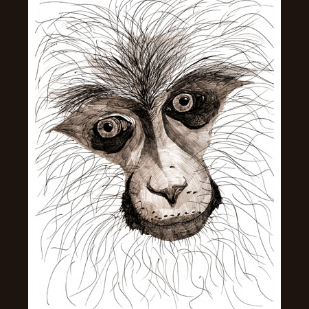 drawing of Monkey