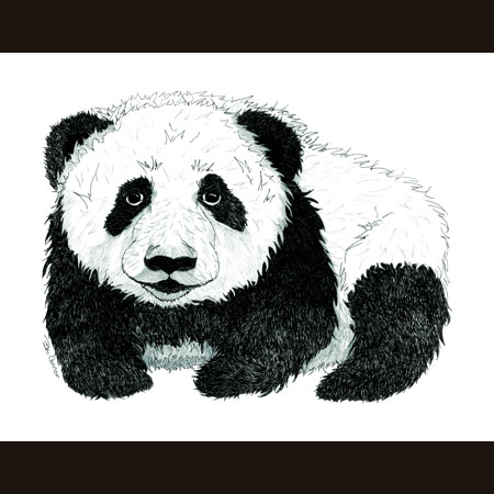 drawing of Panda Baby