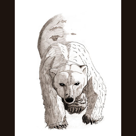 drawing of Polar Bears