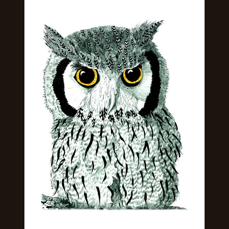 drawing of Scops Owl
