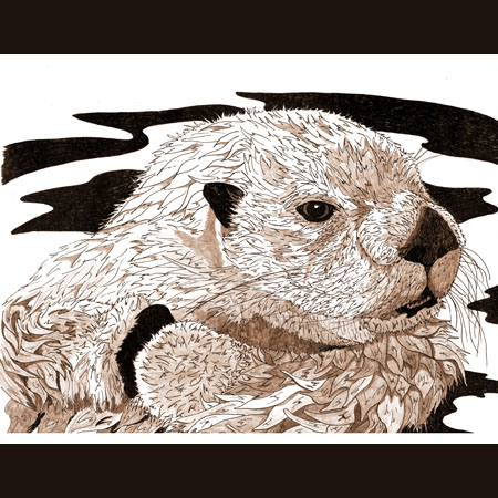 drawing of Sea Otter
