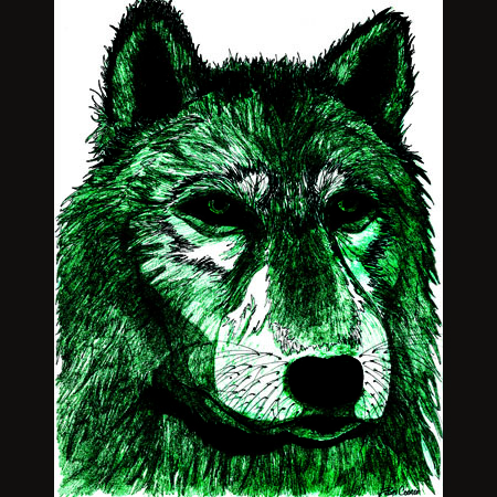 drawing of Gray Wolf / Grey Wolf